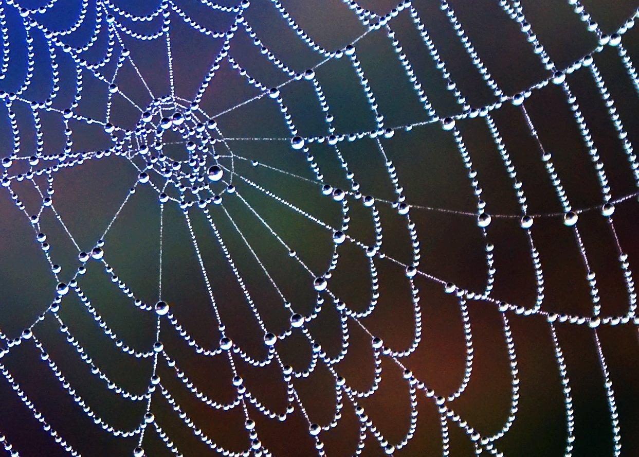 Śmiertelny pająk Chile: araña de rincón