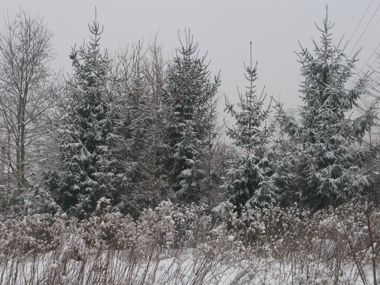 Zapiski śniezne (na kolanie w ojczyźnie)