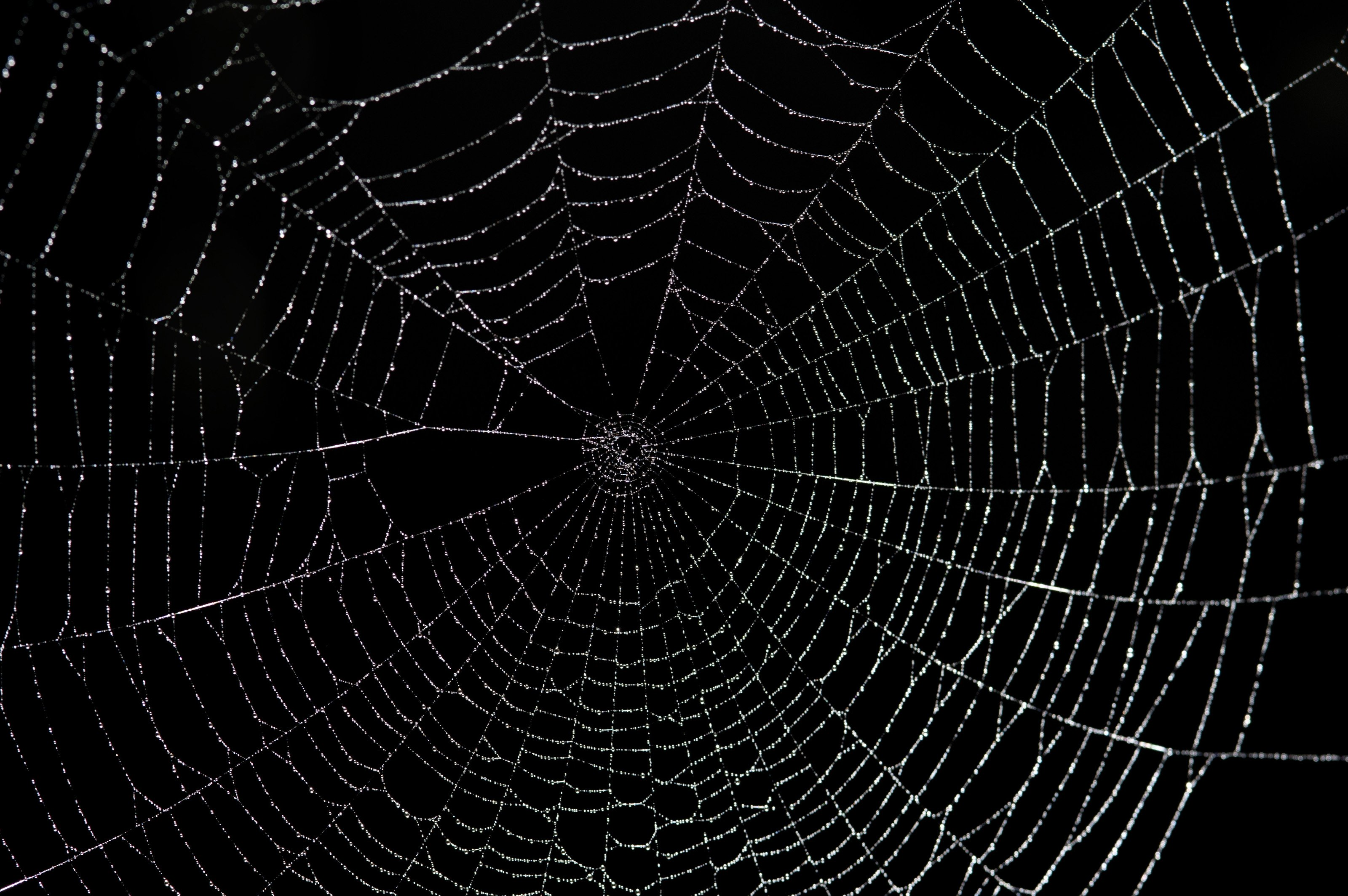Śmiertelny pająk w Chile – jak zminimalizować ryzyko i co robić gdy ukąsi
