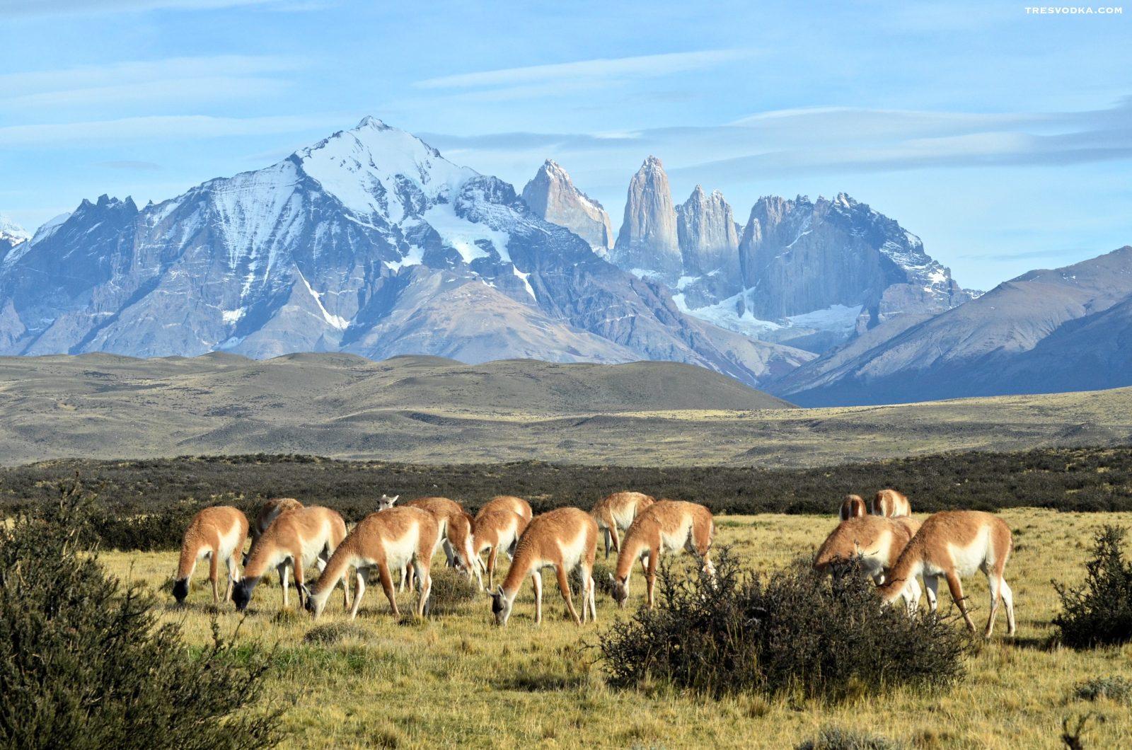 10 pocztówek na moje 10 lat z Chile [GALERIA]